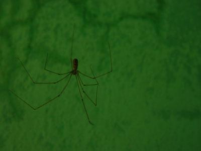 L'aranya
